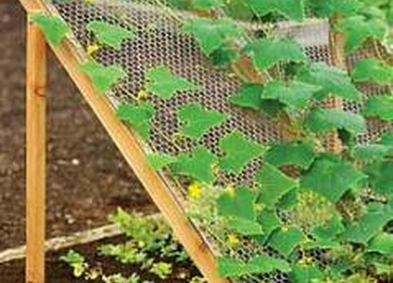 How to Grow Cucumbers cucumber trellis – My Raised Bed Vegetable Garden