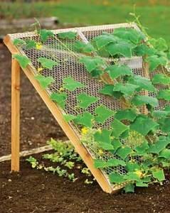 How to Grow Cucumbers cucumber trellis – My Raised Bed Vegetable Garden