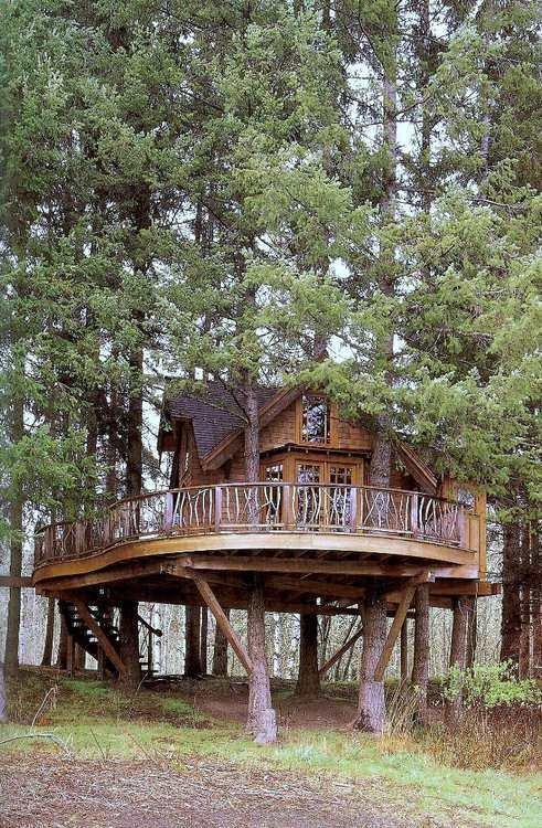 Washington Treehouse
