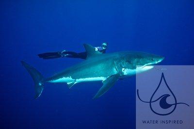 Ocean Ramsey: The Shark Whisperer