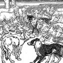 Are You a Sheep or Sheepdog? Part I   The Art of Manliness