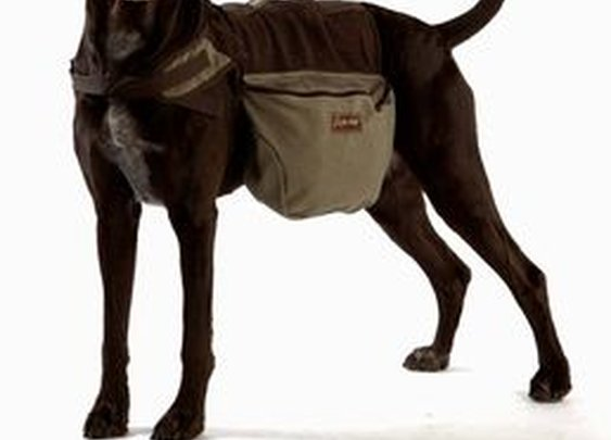 Aussie Canvas Dog Backpack