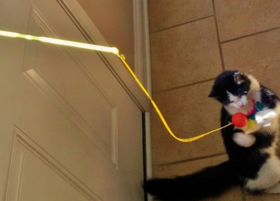 Solar Chaser uses the power of the sun to entertain your cat