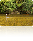 The Basics of Fly Fishing: Basic Fly Fishing Video Lessons
