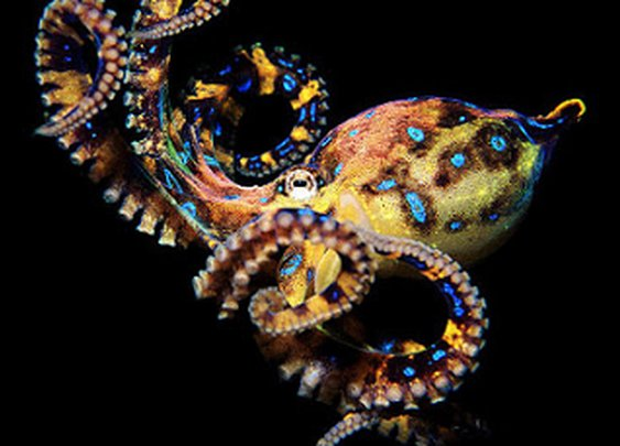 Top 10 Uniquely Deadly Animals in the World