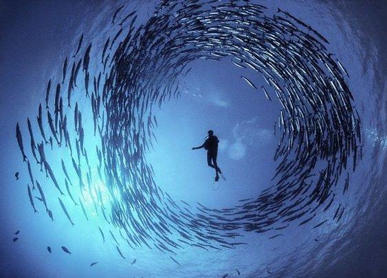 22 Breathtaking Photos of Underwater Life - WOW