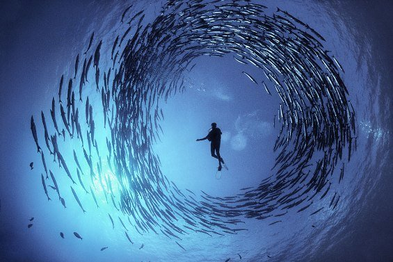 22 Breathtaking Photos of Underwater Life - WOW