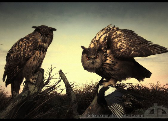 Owls by ~felixexner on deviantART