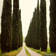 Dirt Biking Through Tuscany: Bucket List