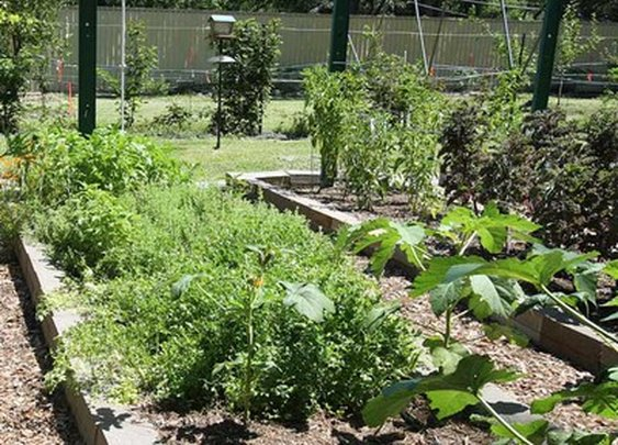 7 No-Cost Ways to Grow More Food From Your Garden : TreeHugger