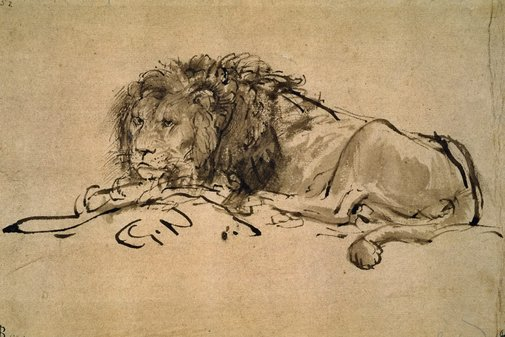 Rembrandt Lion