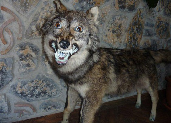 The World's Worst Taxidermy