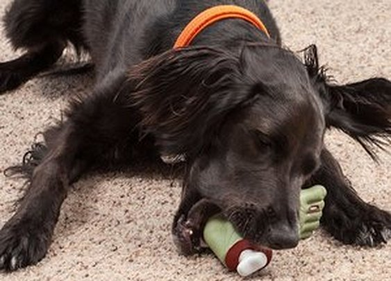 Zombie Foot Dog Toy | materialicious