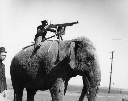 Elephant-mounted machine-gun