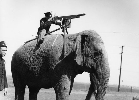 Elephant-mounted machine-gun