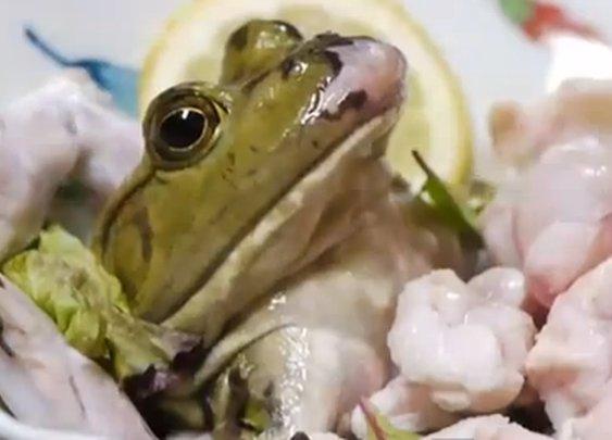 Live Frog Sushi