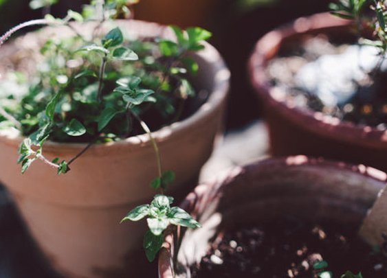 10 Healthy Herbs to Grow at Home
