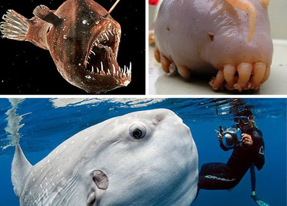 Scary Seas: 21 Terrifying Deep Ocean Creatures