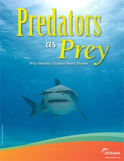 Predators as Prey: Why Healthy Oceans Need Sharks