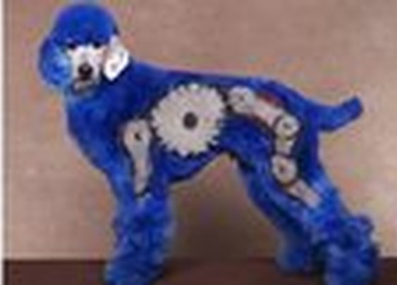 CBBC Creative grooming competition shows crazy dog designs