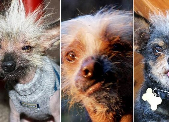 World's ugliest dog contenders