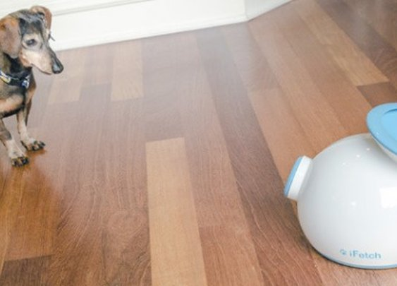 iFetch allows a dog to play fetch on its own