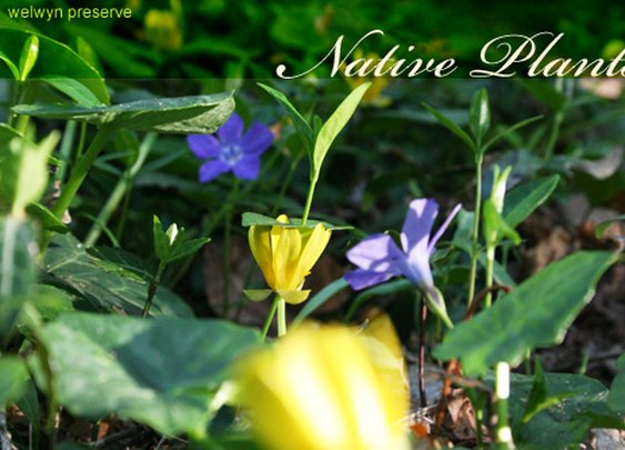 Top Ten Reasons To Use Native Plants In Your Landscape and More… | Long Island Gardening Community Resource