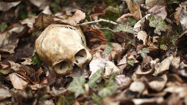 The 12 Worst Ways to Die in the Wild