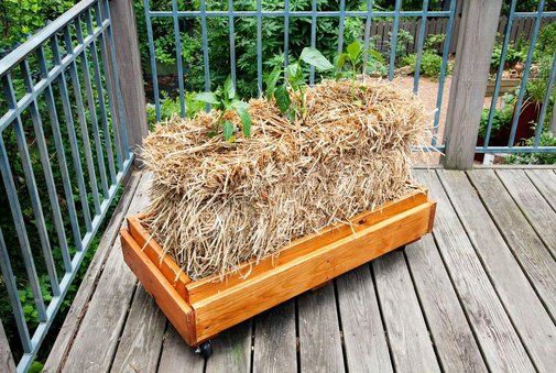 How to Condition and Plant a Straw Bale - Bonnie Plants