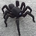 T8 robot tarantula gives everyone the willies