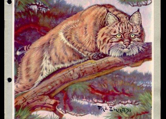 National Wildlife Federation 1942 Album-Mounted Stamps