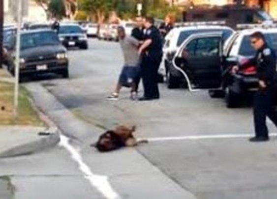 Police Arrest Bystander and Shoot Dog - Prepper Recon.com