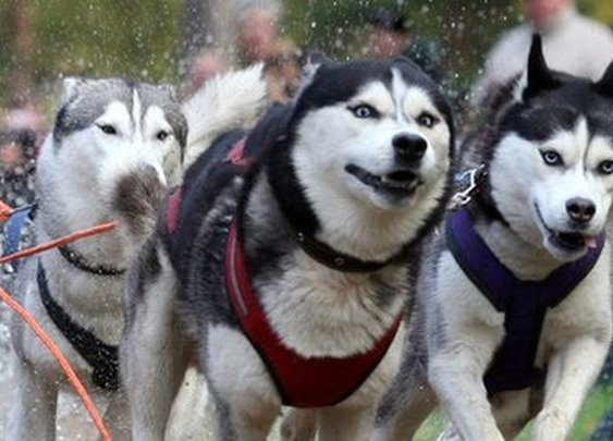 DNA confirms ancient Asian origin for American dogs