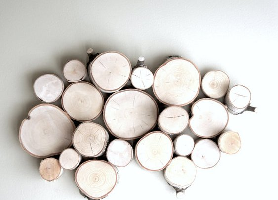 white birch forest topography