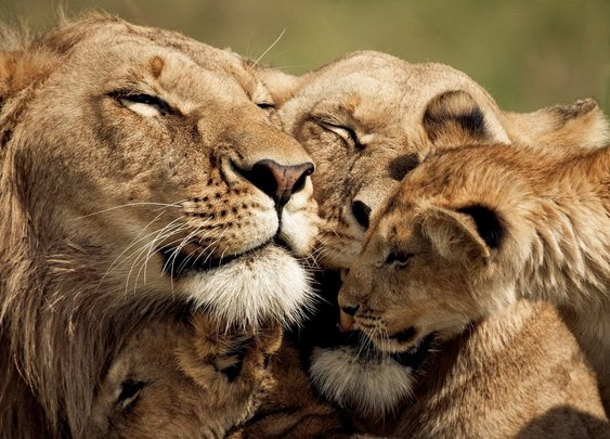 (Pride) In The Name of Love | Manlihood.com