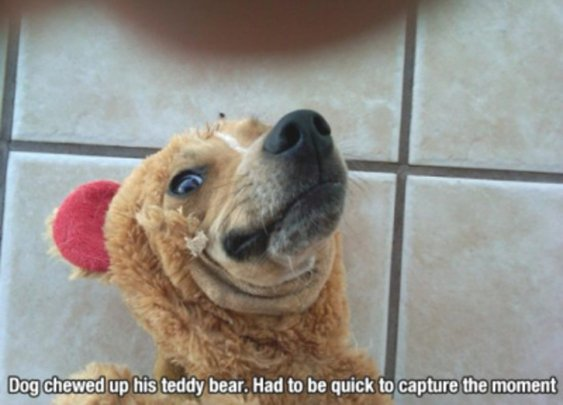There's a reason dogs are mans best friend - StumbleUpon