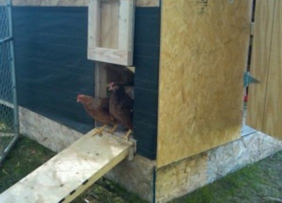 5 Uses For Chickens In the Garden – Mike's Backyard Nursery