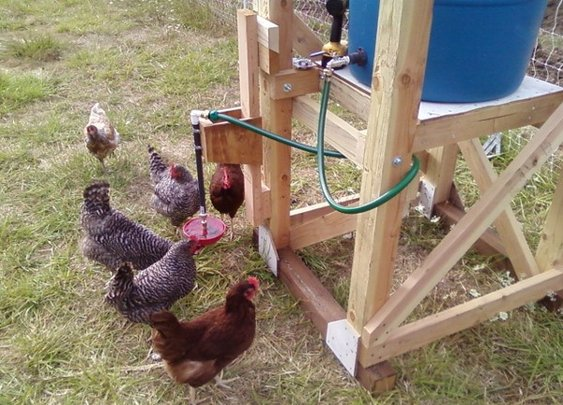 MAKE |   Building an automatic chicken waterer