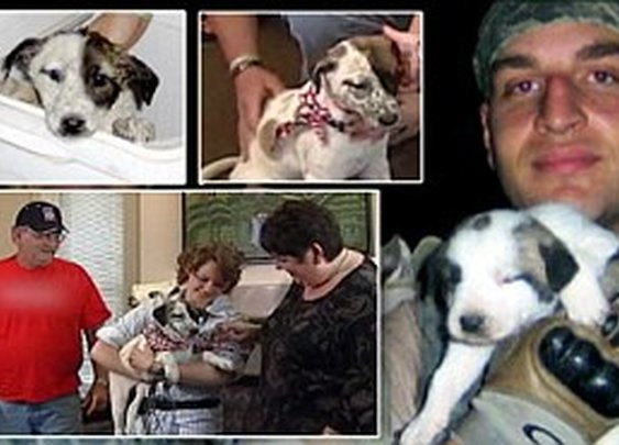 Their son never came back from Iraq, the puppy he saved did: The amazing story of how bereaved parents rescued dog of war  | Mail Online