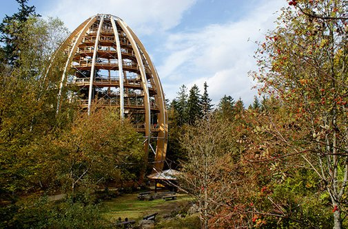 Tree Top Walkway – Bavarian Forest