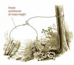 3 Simple Snares For Small Game - Prepper Recon.com
