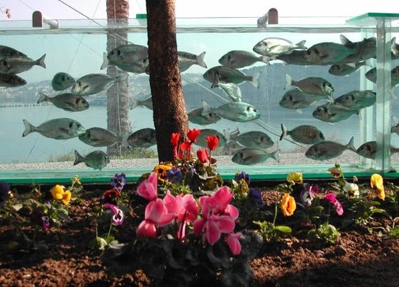 WOW. Don't like your view? Build an Aquarium fence!