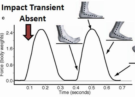 Running Barefoot: Biomechanics of Foot Strike