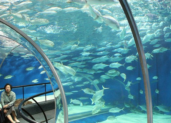 13 of the World's Great Aquariums