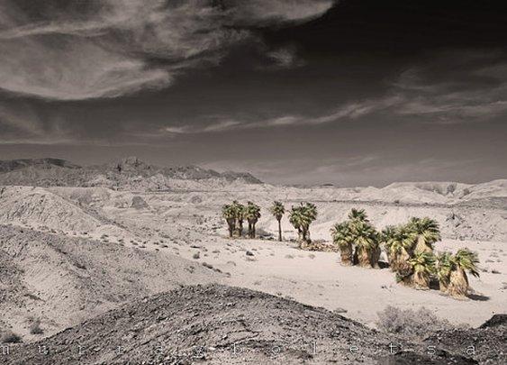 Photography Mojave Desert California Art Anza by MurrayBolesta