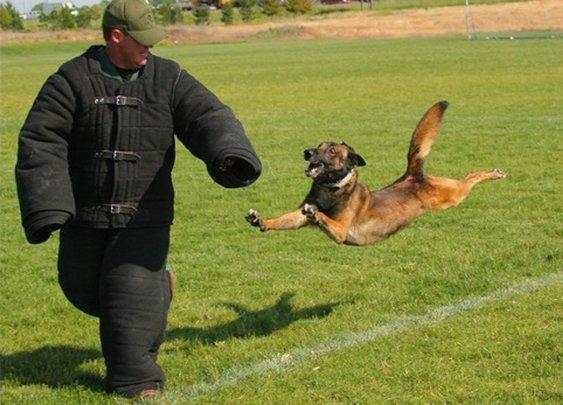 Police Dogs - POLICE Magazine