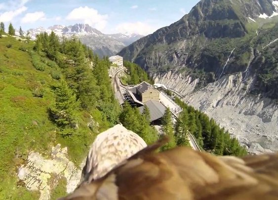 Flying eagle point of view - YouTube
