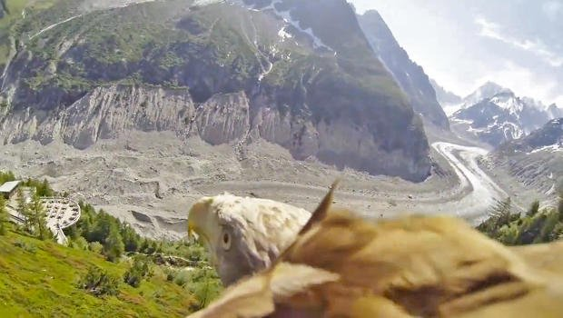 Some Hero Strapped a GoPro Camera Onto An Eagle And The Footage Is Breathtaking | Co.Create | creativity + culture + commerce