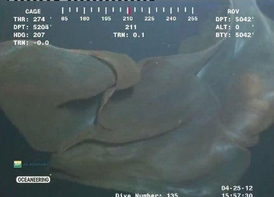 Massive sea monster spotted on deep-sea oil rig camera (VIDEO) | The Libertarian Republic