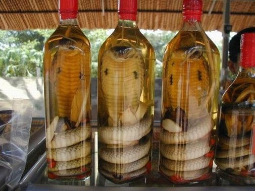 Snake Bites Woman After Being Preserved In Wine For Three Months